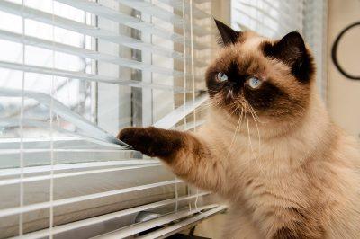 Modernisieren in Tegel: 6 Gründe für neue Fenster von Fenster Krokos